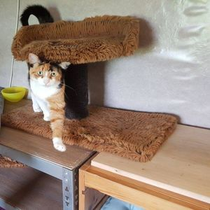 Kattenpension Wieringerwaard image 3