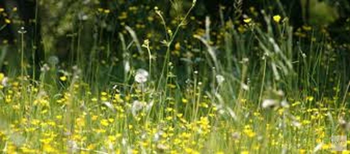 Hooikoortspatiënten opgepast: vanaf dit weekend pollenexplosie