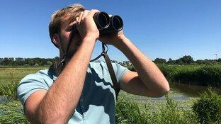 Droogte nekt weidevogels: Landschap Noord-Holland neemt maatregelen