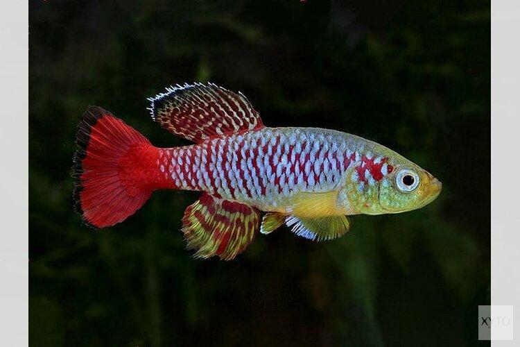 Aquariumcursus bij Hugo Aqua