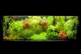 Activiteiten aquariumvereniging Hugo Aqua in september