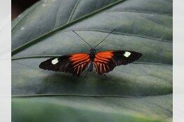 Vlindorado: Tropisch uitje in eigen land nog tot 12 november geopend