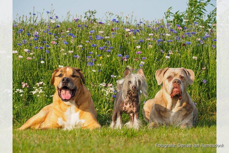Laat uw hond genieten bij Funkey DogCenter