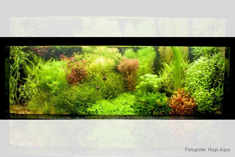 Uitslag van de aquarium- en vijverkeuring  bij Hugo Aqua