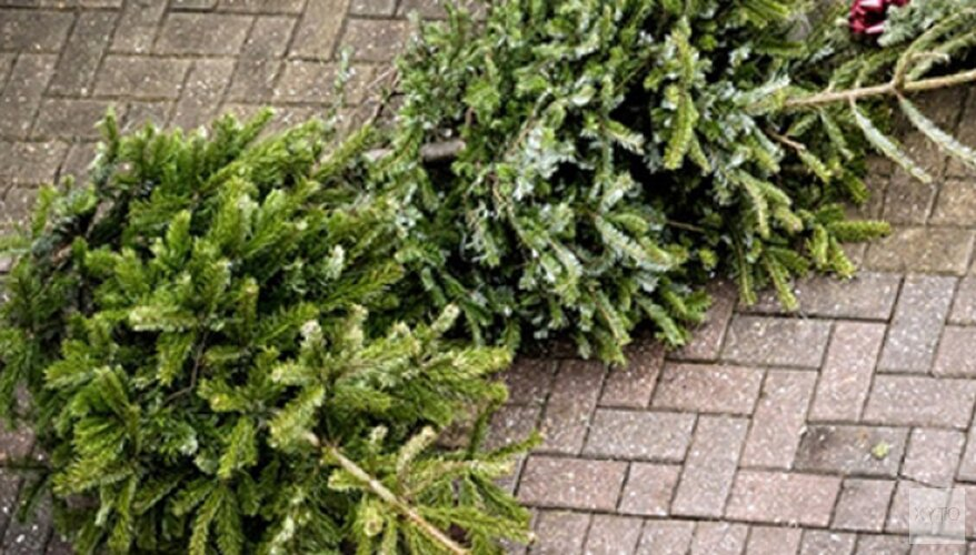 Kerstbomen opgehaald vanaf 7 januari