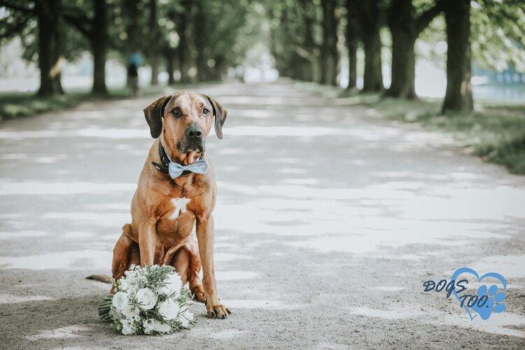 Gratis intake voor aanstaande bruidsparen met hond