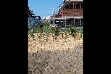Eerste bewoner nieuwbouwwijk Heerhugowaard wint minibos in tuin