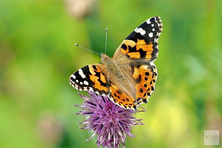 Laat de vlinders nu maar komen