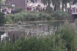 Zoekactie na vondst fiets langs water in Heerhugowaard: duikers ingezet