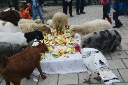 Dierendag bij Kinderboerderij Jong Leven in Sint Pancras