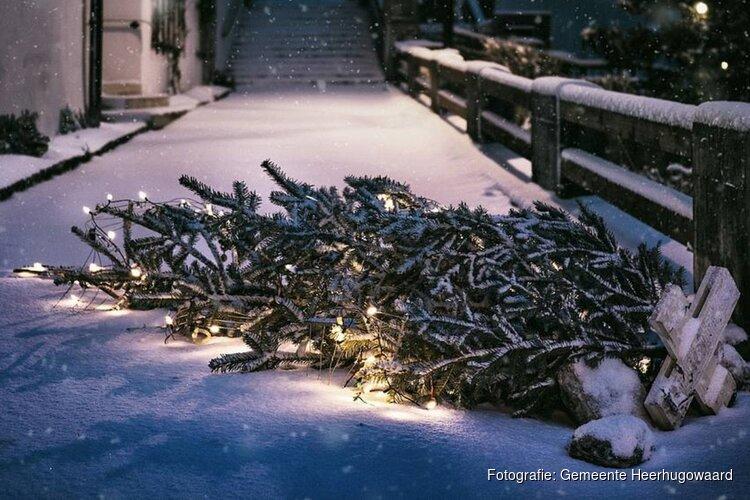 Inzameling kerstbomen vanaf 6 januari