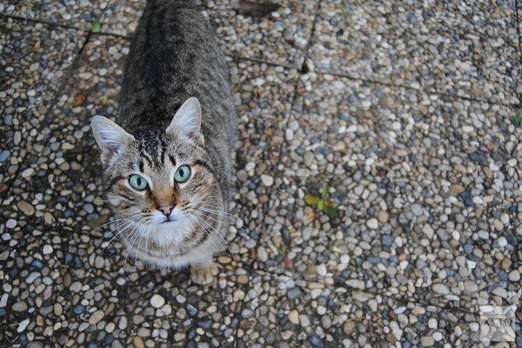Onderzoek naar mysterieuze dood en mishandeling van mogelijk meerdere katten