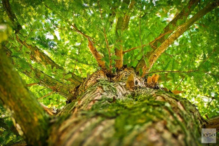 Duizenden nieuwe bomen in de Waarderhout