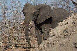 Dierenleven in de wildparken van Zuid-Afrika
