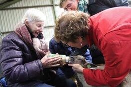 Lammetjes kijken met dementerenden