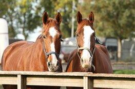 Lizzy, een allerliefst manegepaard, gaat genieten van haar welverdiende pensioen.