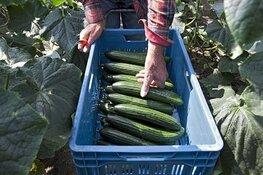 Nieuwe app laat zien waar jij lokaal eten kunt kopen