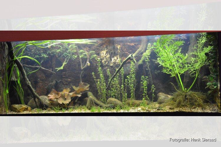 Henk Sieraad over aquariumhouden in buurthuis ''De Ezel''